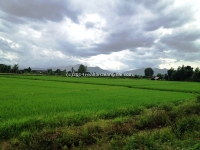 Land for sale 190 Rai in Banthi in Lumpoon, Thailand